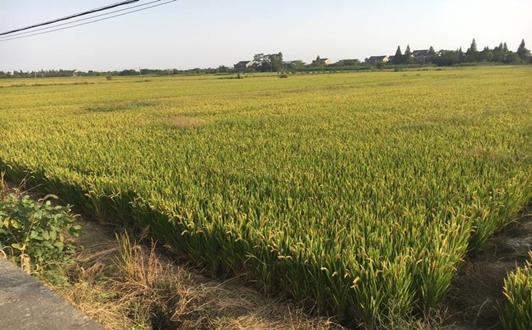 江苏计划2020年废旧农膜回收利用率达80%以上