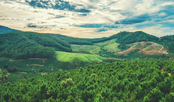 罗马尼亚2020年木材开采量预计为950万立方米