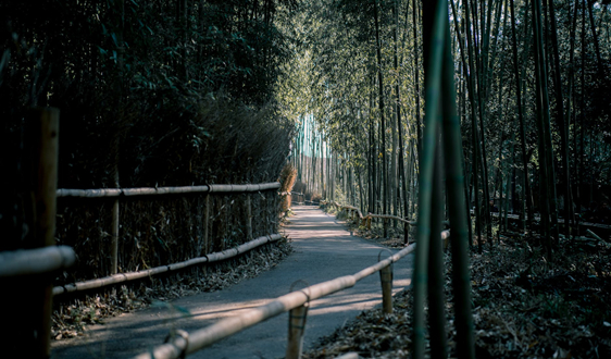 中國成越南木材最大出口國 占比達22.91%
