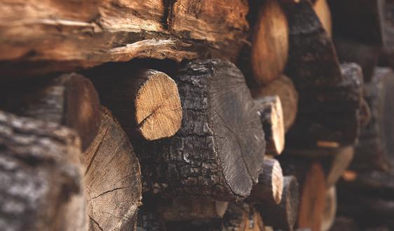 白俄羅斯木材巨頭今年前9月出口8900萬美元