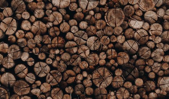 我国前三季度林业产业总产值超5万亿