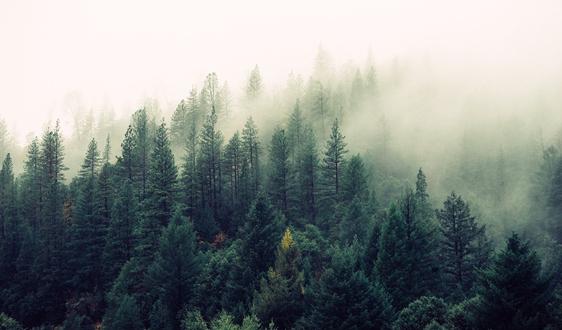 加拿大擴展林紙業務